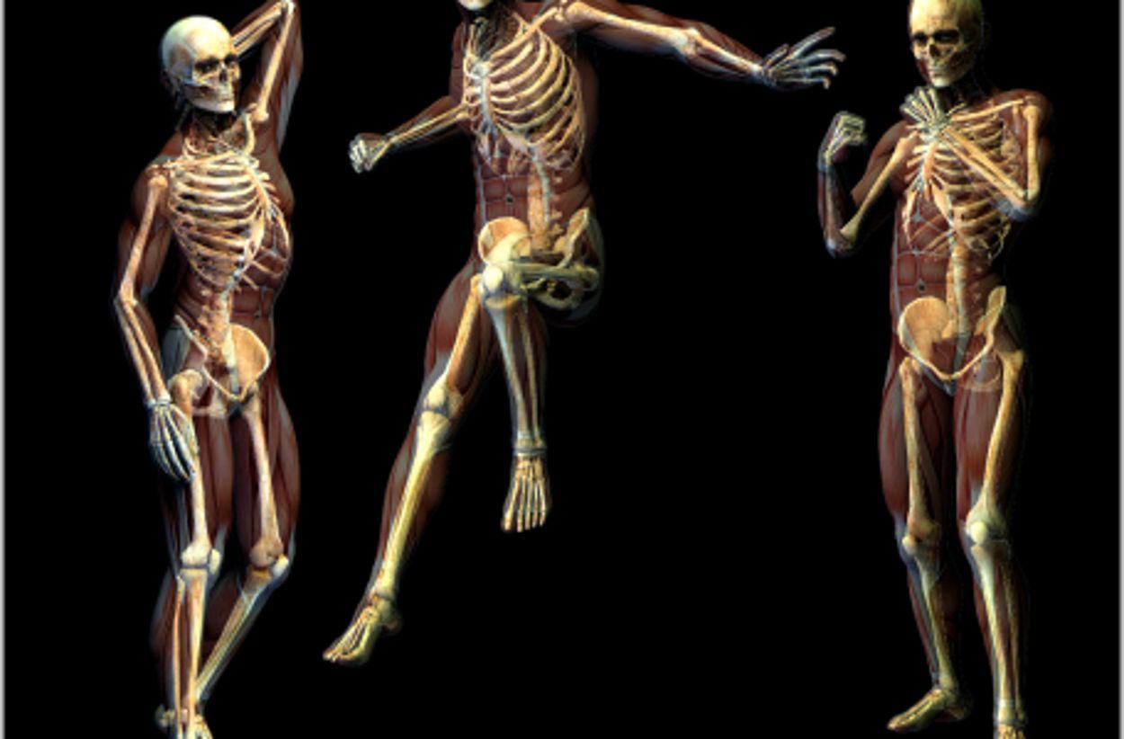 Body-Mind Centering®   Embodied Anatomy of Skeletal, Organ